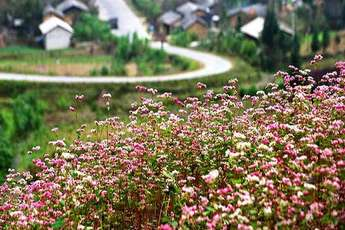 6 typical Ha Giang dishes to try when buckwheat is in bloom