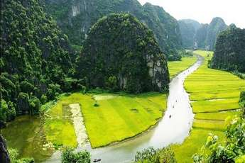 The exhilarating beauty of the golden harvest at Tam Coc