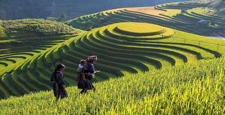 Wonderful rice terraces in Sapa Vietnam