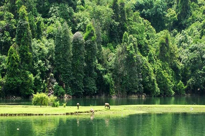 Ba Be Lake, a green jewel in North Vietnam