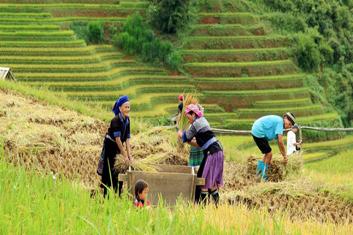 Rice terraces in Vietnam, the most beautiful mountain scenery