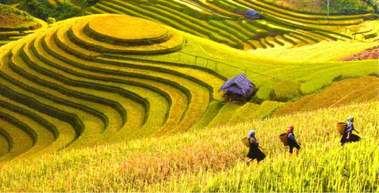 Discussion about the heritage Terraced Rice Fields in the upland area of Vietnam