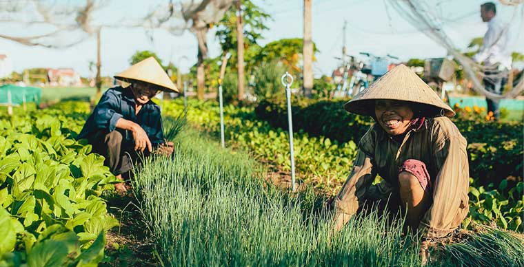 Tra Que Vegetable Village, destination of choice in Hoi An