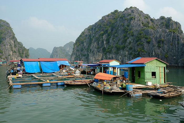 10 things to do in Cat Ba island fishing village