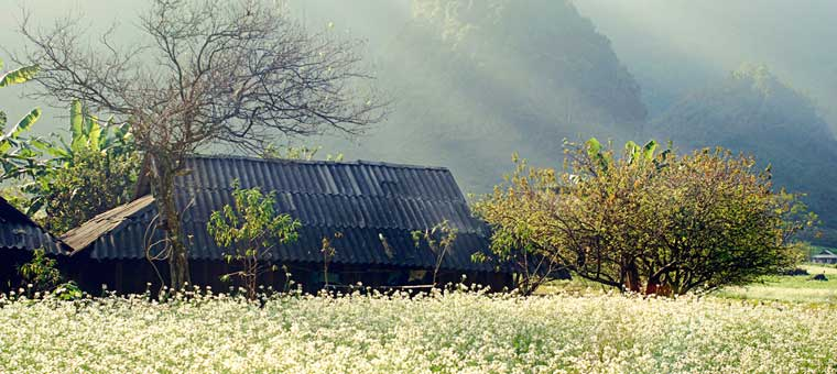 3-reasons-for-visiting-Vietnam-after-Tet-holiday-spring