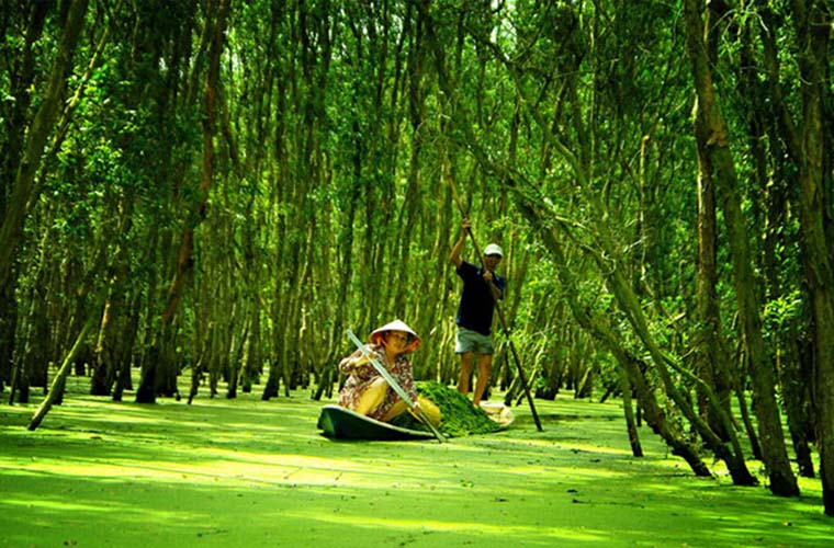 The 5 Best Things To See In the South of Vietnam Tra Su forrest