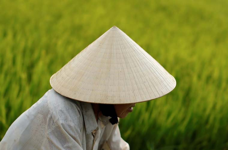 The beauty of Vietnamese conical hat authenticity of peaseant