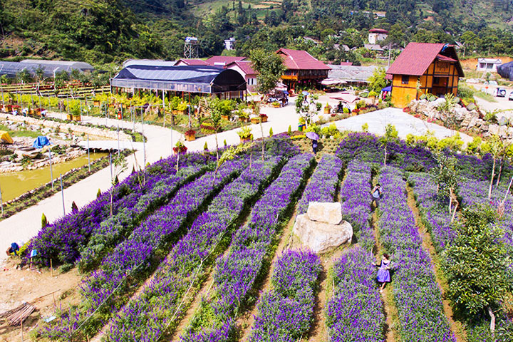 bac ha vietnam flower valley