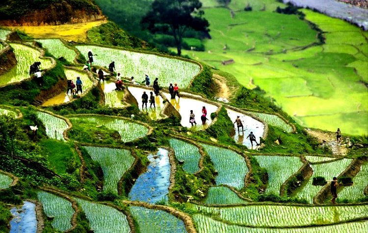 beautiful rice terraces in Vietnam rainy season