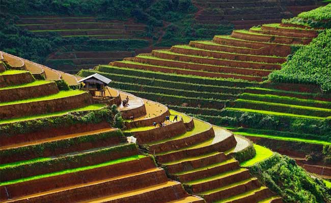 rice terrace in Mu Cang Chai Vietnam