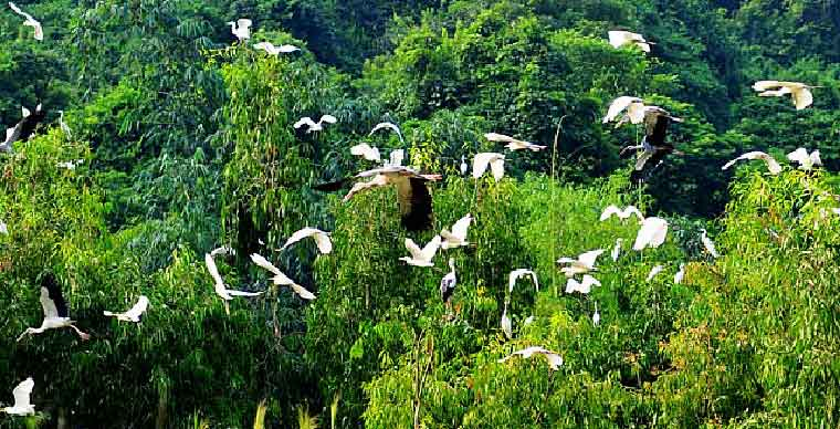 /bird-garden-thung-nham-garden-bird-what-to-do-in-ninh-binh