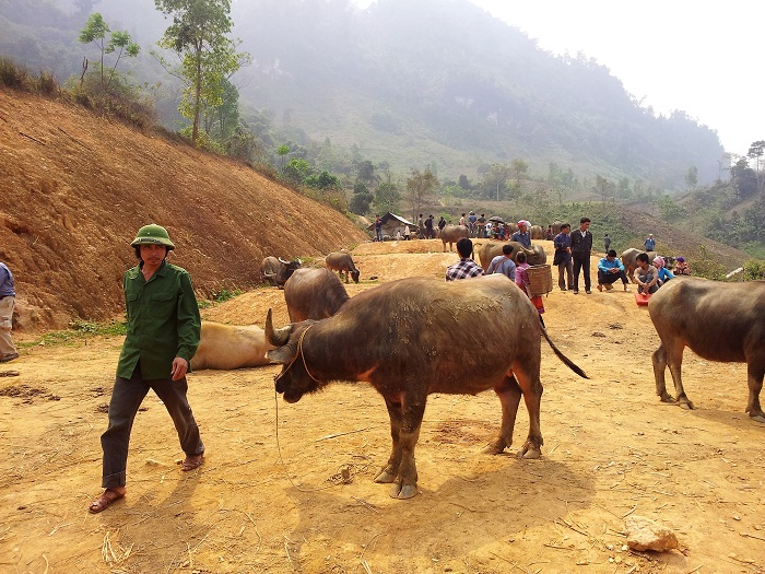 coc ly bac ha buffalo trading area