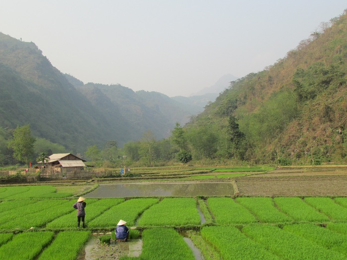 coc ly bac ha rice terraces