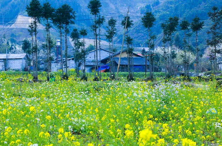 ha-giang-travel-guide-spring.jpg