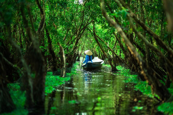 mekong delta tra su forest