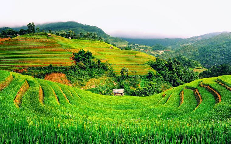 muong-hoa-valley-green-terrace