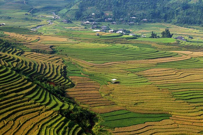 rice terraced mu cang chai tu le valley