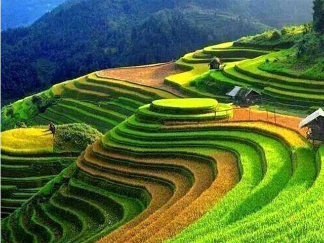 rice terraces hmong