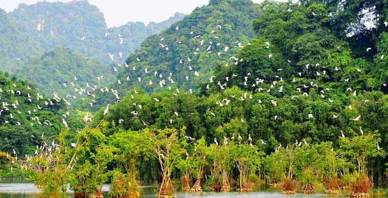 thung-nham-bird-garden-ninh-binh