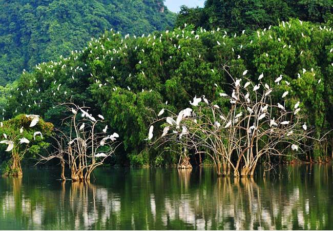 thung nham bird sanctury