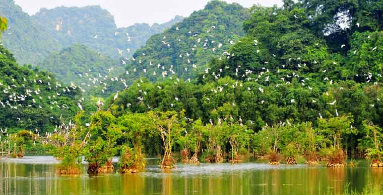 thung-nham-garden-bird-what-to-do-in-ninh-binh