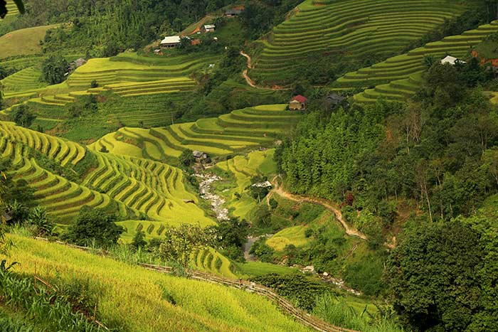 trekking in hoang su phi ha giang rice terraces