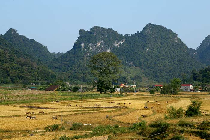 visit cao bang in 2 or 3 days the countryside