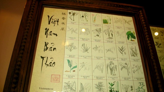 visit vietnam visit Fito museum traditional herb