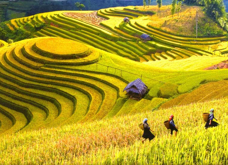 visit-sapa-from-a-to-z-golden-season