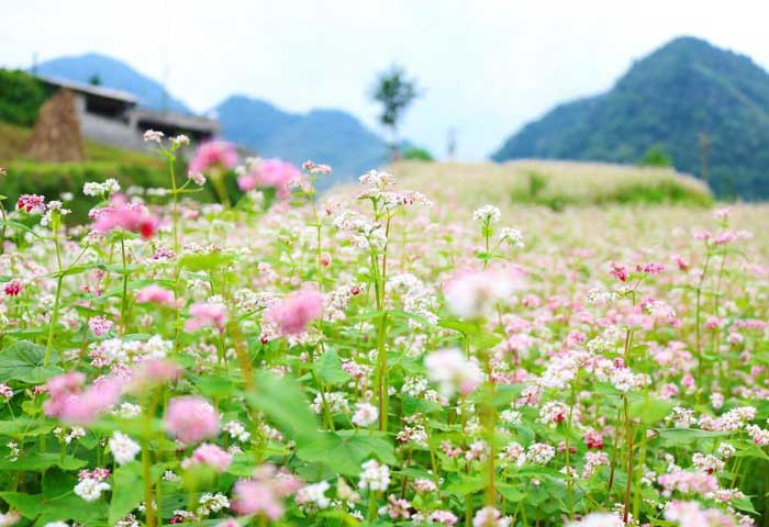 what to visit in Ha Giang Sung La