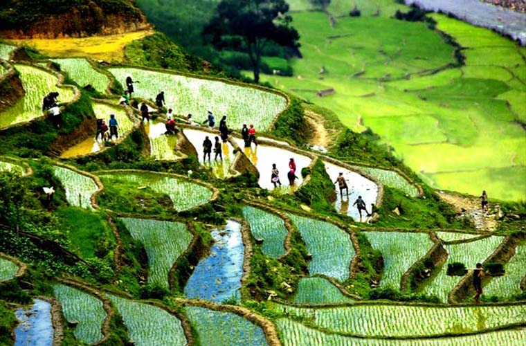 wonderful-rice-terraces-in-Sapa-vietnam-cultivation.jpg