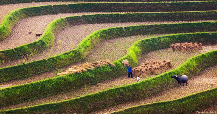 wonderful-rice-terraces-in-Sapa-vietnam-growing-rice.jpg
